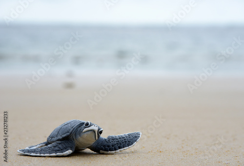 Poster Tortue baby Turtle on Beach