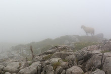View Of The Sheep Lost In The Fog