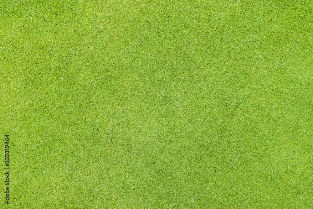 Fototapety, obrazy: Golf fairway grass texture top view