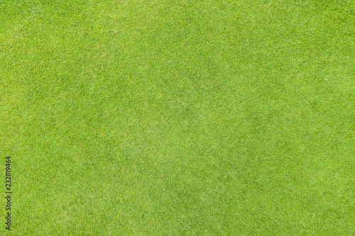 Poster Gras Golf fairway grass texture top view