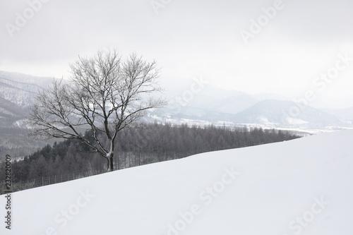 Fotografía  Winter mountain, a wintry landscape