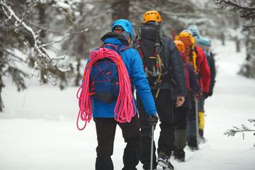 Fototapeta Group of climbers goes on snow-covered forest in the highlands.