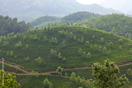 Spoed Foto op Canvas Asia land Tea plantations in Kerala, South India