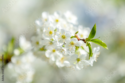 Staande foto Lente Beautiful nature scene with blooming tree and sun flare