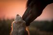 Tierliebe zwischen Hund und Pferd
