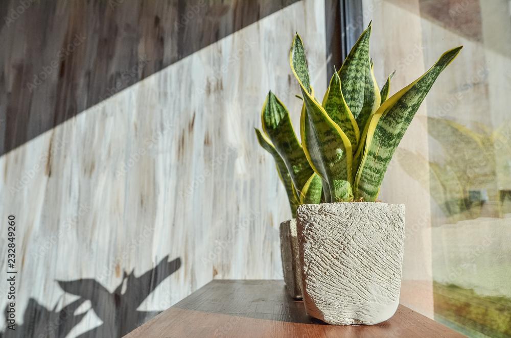 Fototapety, obrazy: Green plants in pots on grey grunge background