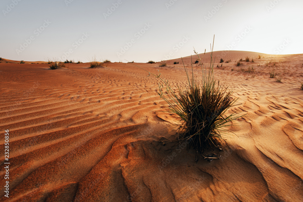 Sand dune in a desert. United Arab Emirates