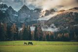 Dwa konie na zielonych pastwiskach pod dużymi górami - 232853459