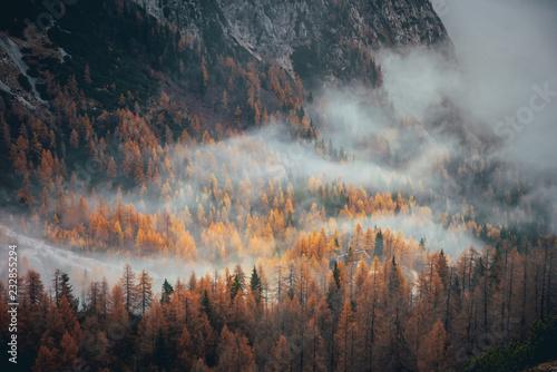 Mgła w lesie jesienią pomarańczowy. Alpy