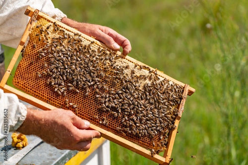 The beekeeper examines the frames with honey Canvas Print