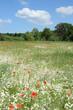 canvas print picture - Blumen auf einem Feld