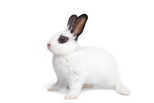 Easter Card Design. White Funny Bunny Rabbit Portrait Isolited On White Background. Rabbit Silhuette.