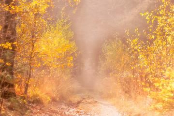 Fototapeta Drzewa autumn background