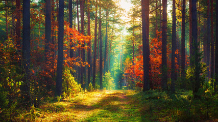 Obraz na Szkle Las Autumn nature landscape of colorful forest in morning sunlight.