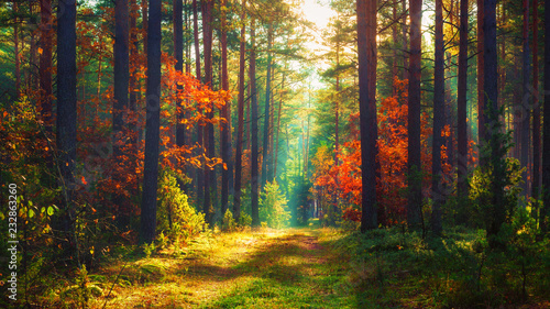 Aluminium Prints Autumn Autumn nature landscape of colorful forest in morning sunlight.