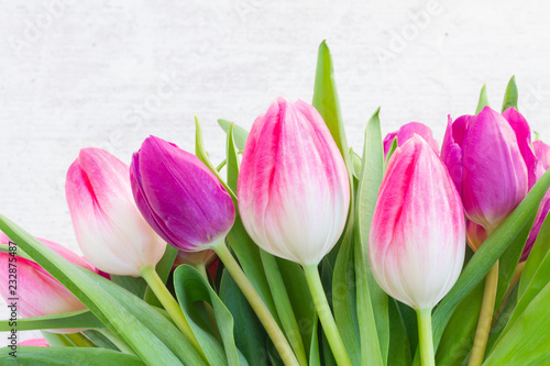 Foto op Plexiglas Tulp Violet fresh tulip flowers row on white wooden background with copy space