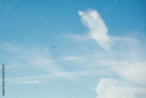 Fototapeta Blue sky with clouds and seagull bird obraz na płótnie