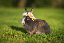 Little Rabbit With A Wreath Of...