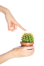 Female Finger Touch Prickly Cactus Isolate On White Background. Concept Of Risk And A Danger
