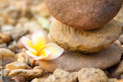 Stones stacked and white yellow plumeria flower close up.