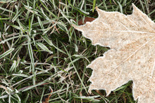 Frost Covered Leave On Grass