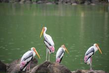 Bird At The Lakeside