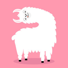 Llama Alpaca Turning Head Face, Tongue. Cute Cartoon Funny Kawaii Character. Fluffy Hair Fur. Childish Baby Collection. T-shirt, Greeting Card, Poster Template Print. Flat Design. Pink Background.