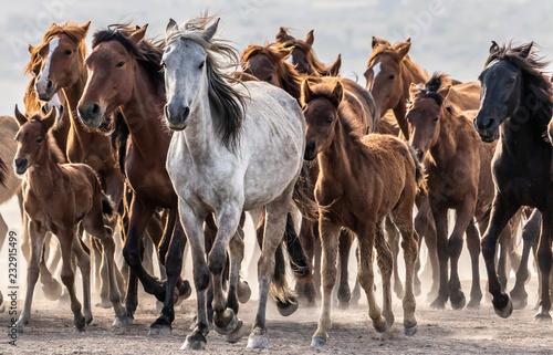 Fotografie, Obraz  free horses