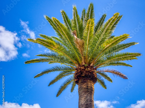 Foto op Plexiglas Palm boom Tall Date palm tree isolated against the blue sky and clouds on a sunny day