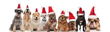 Adorable Team Of Dogs Wearing ...