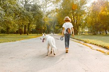 Children Teenagers Boy And Girl Walking On The Road In The Park With A White Dog Husky, Back View
