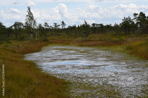 Staande foto Blauwe hemel Kemeri national park, bog and lakes landscape picture with trees refelcting in the water