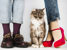 Cute, Charming Kitten And Legs Of A Young Couple In Stylish Shoes. White Background, Isolated, Close-up. Style, Fashion, Elegance