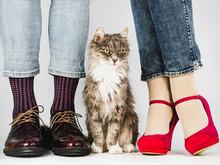 Cute, Charming Kitten And Legs...
