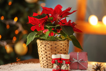 Christmas Flower Poinsettia Wi...