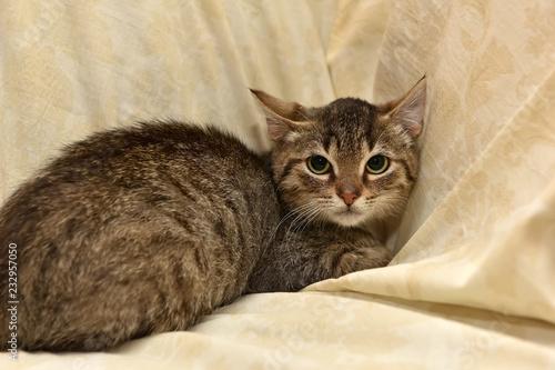 Fotografía  frightened tabby kitten