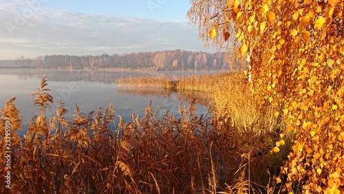 Fototapeta premium złote liście na jesień