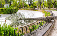 Fallen Tree Crash In City Park, Damage And Danger At Storm Concept