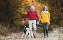 A Senior Couple With A Dog On ...