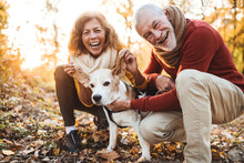 A Senior Couple With A Dog In ...