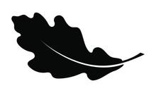 Oak Leaf Graphic Icon. Oak Lea...