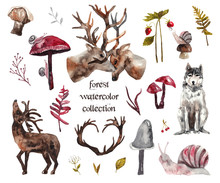 Watercolor Forest Collection. Plants, Flowers And Mushrooms, Deer, Wolf, Snails. Watercolor Illustration On White Isolated Background