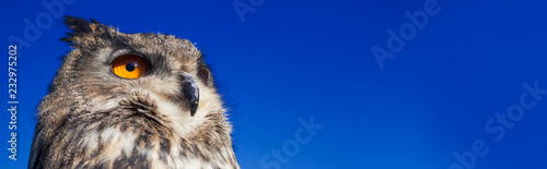 Photo sur Toile Chouette European Eagle Owl Panoramic Web Banner
