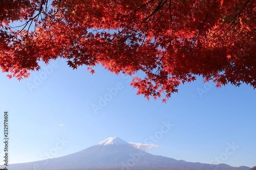 Tuinposter Rood paars 紅葉と富士山