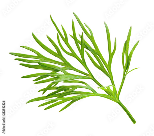 Leinwand Poster Dill. Fresh dill herb macro.