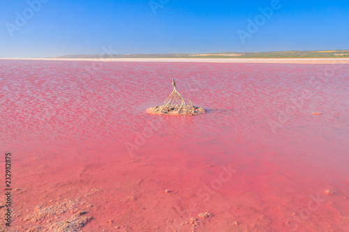 Foto op Aluminium Oceanië Pink Salt Lake in Gregory, Western Australia. Horizon landscape of Hutt Lagoon between Geraldton and Kalbarri. Vivid pink color for the presence of algae in summer. Blue sky with copy space.