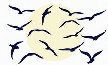 Gulls. Flocks Of Birds. Silhou...