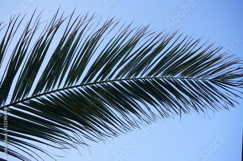 Fotografija  palma e cielo