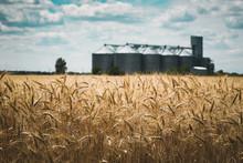 The Grain Elevator