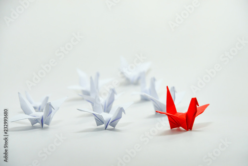 Photo  Close up red bird leading among white, Leadership concept, Organization moving forward